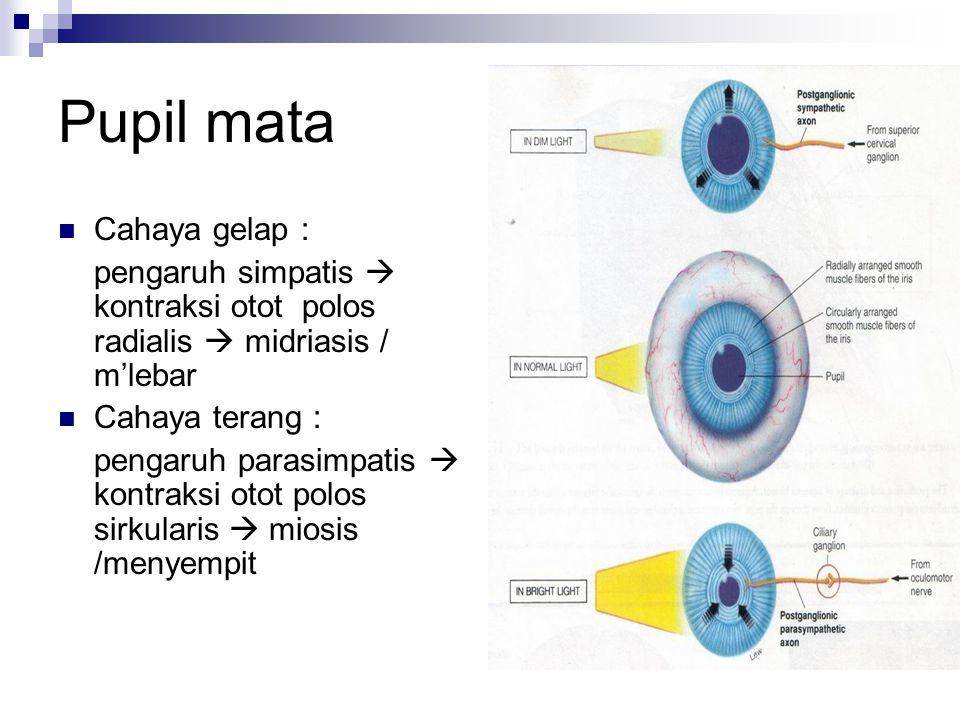 Pupil mata Cahaya gelap :