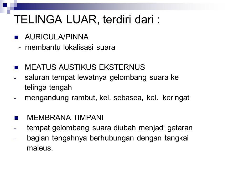 TELINGA LUAR, terdiri dari :