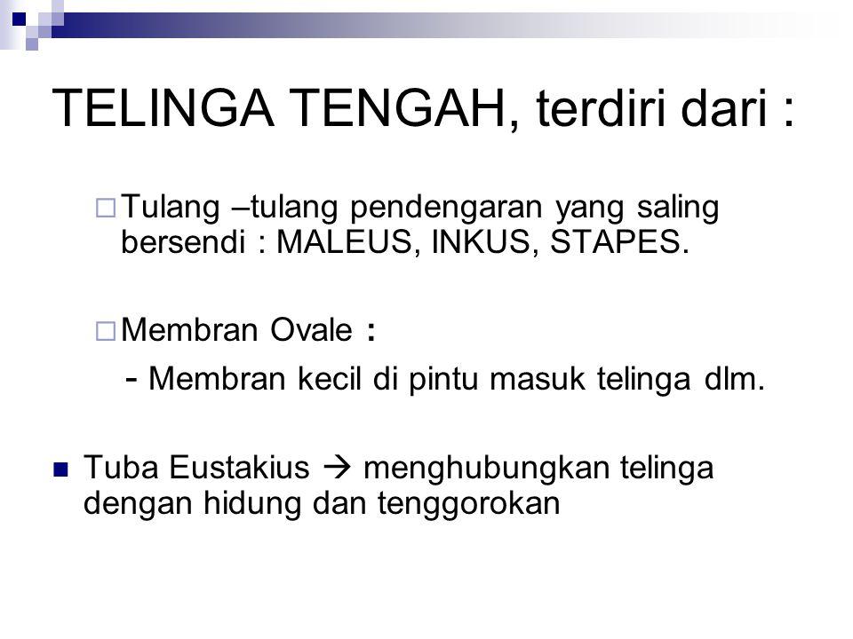 TELINGA TENGAH, terdiri dari :
