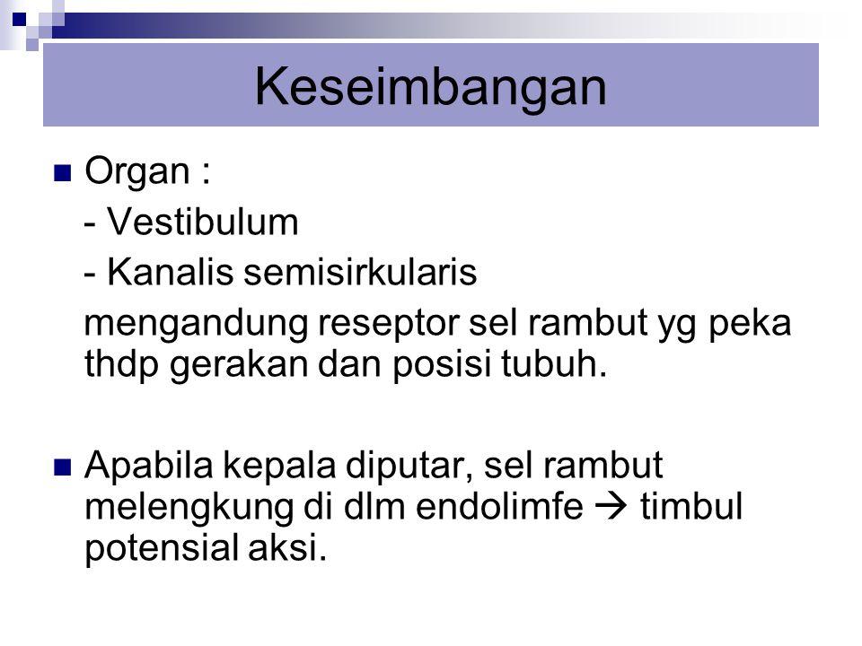 Keseimbangan Organ : - Vestibulum - Kanalis semisirkularis