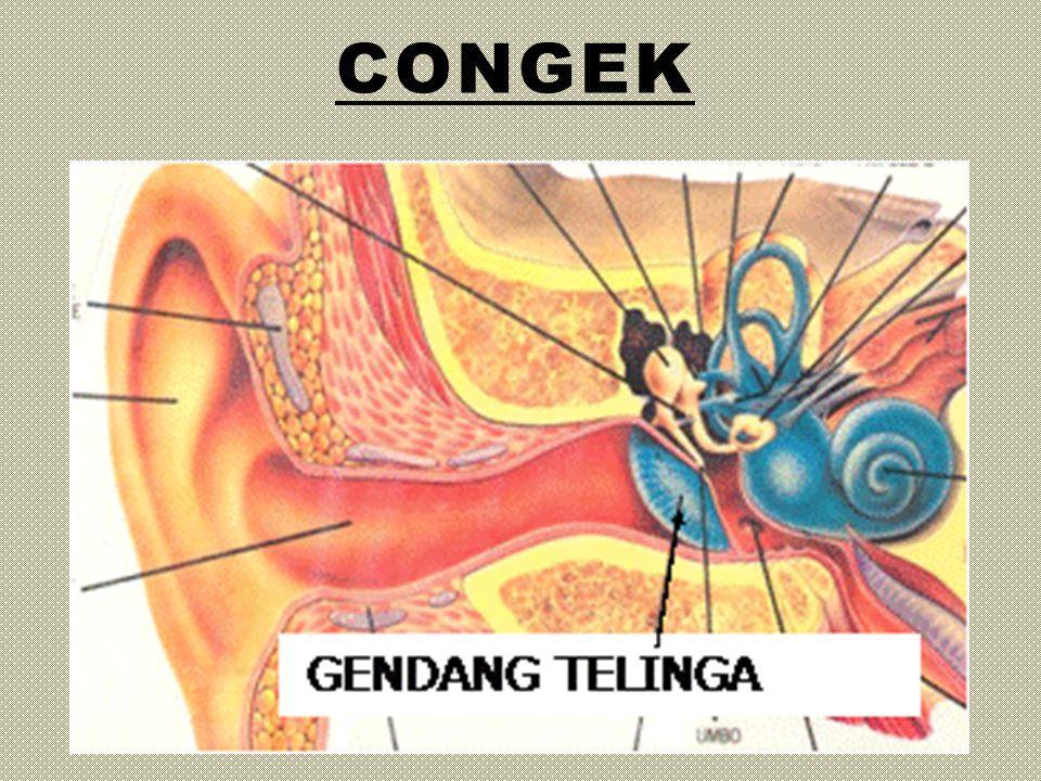 congek