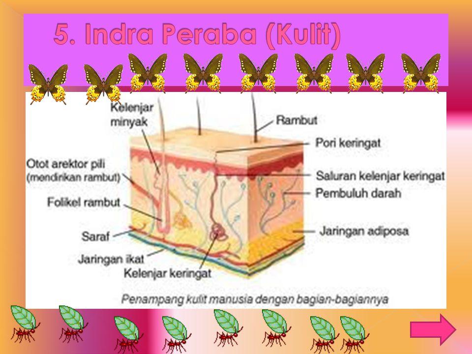 5. Indra Peraba (Kulit)