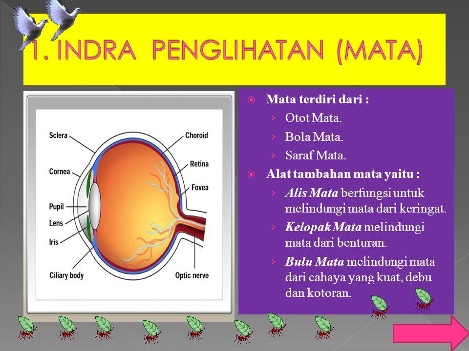 1. INDRA PENGLIHATAN (MATA)