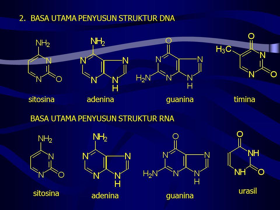 2. BASA UTAMA PENYUSUN STRUKTUR DNA
