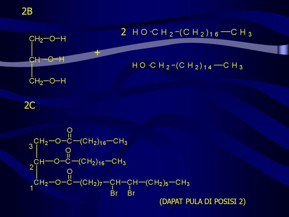2B 2 + 2C (DAPAT PULA DI POSISI 2)