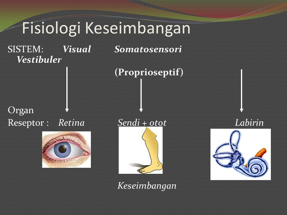 Fisiologi Keseimbangan