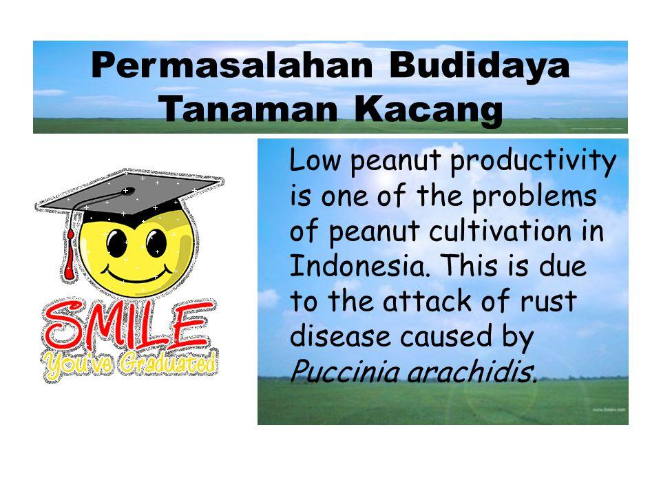 Permasalahan Budidaya Tanaman Kacang