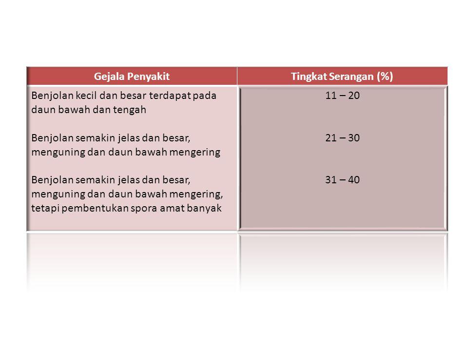 Gejala Penyakit Tingkat Serangan (%) Benjolan kecil dan besar terdapat pada daun bawah dan tengah.