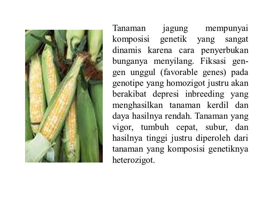 Tanaman jagung mempunyai komposisi genetik yang sangat dinamis karena cara penyerbukan bunganya menyilang.