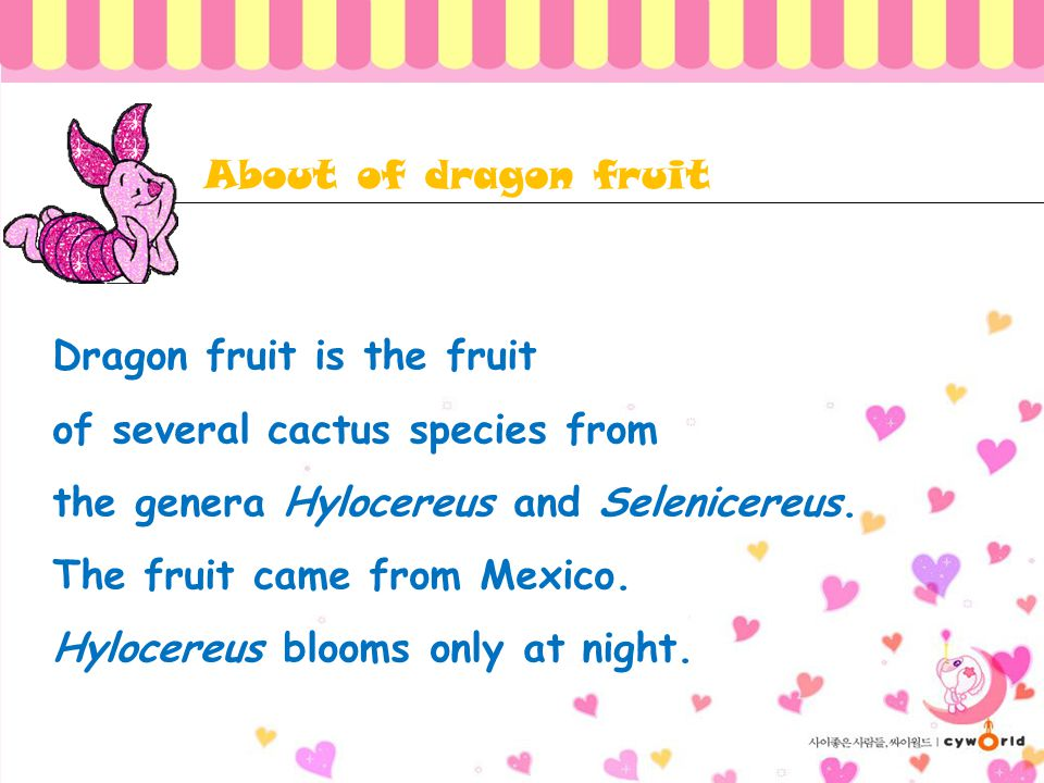 About of dragon fruit Dragon fruit is the fruit. of several cactus species from. the genera Hylocereus and Selenicereus.