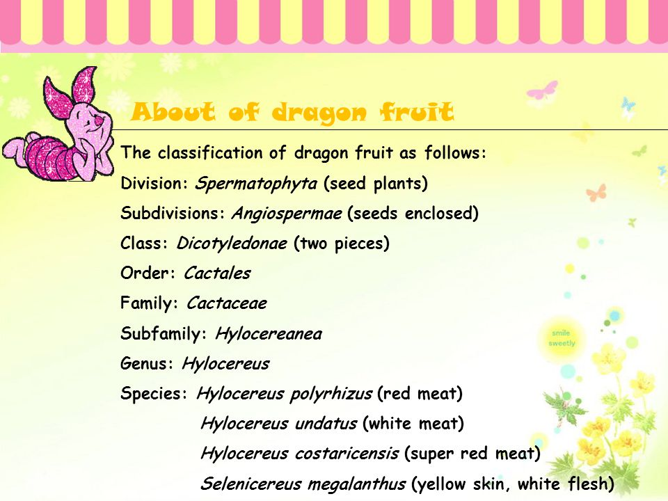 About of dragon fruit
