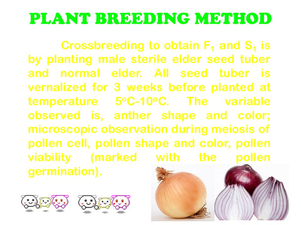 PLANT BREEDING METHOD