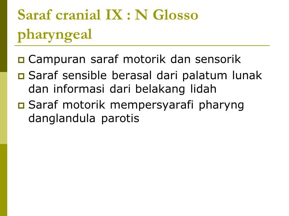 Saraf cranial IX : N Glosso pharyngeal