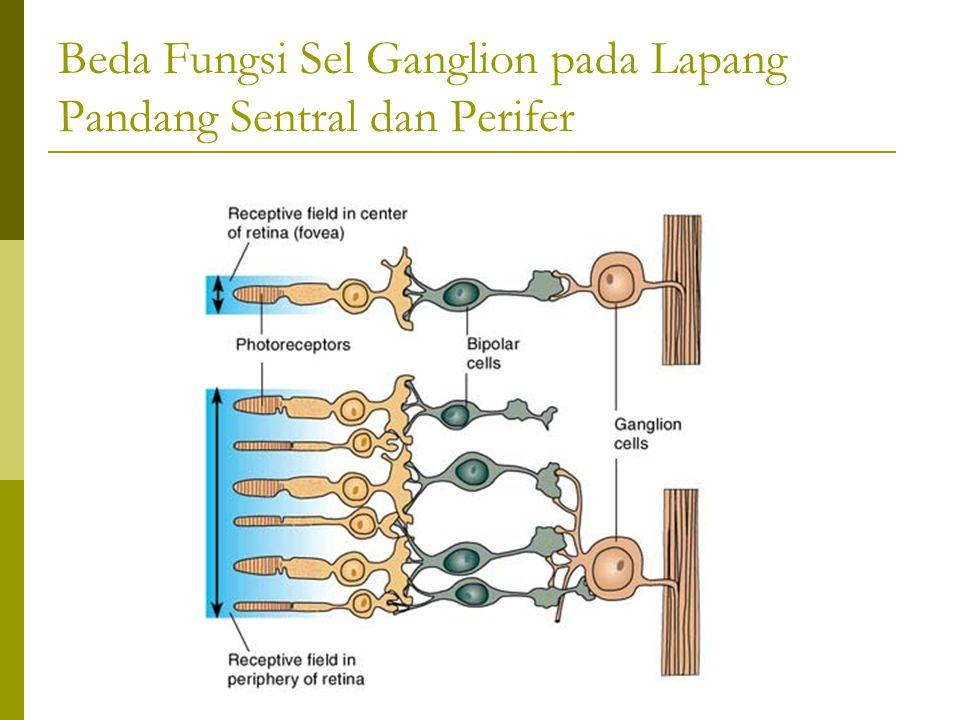 Beda Fungsi Sel Ganglion pada Lapang Pandang Sentral dan Perifer