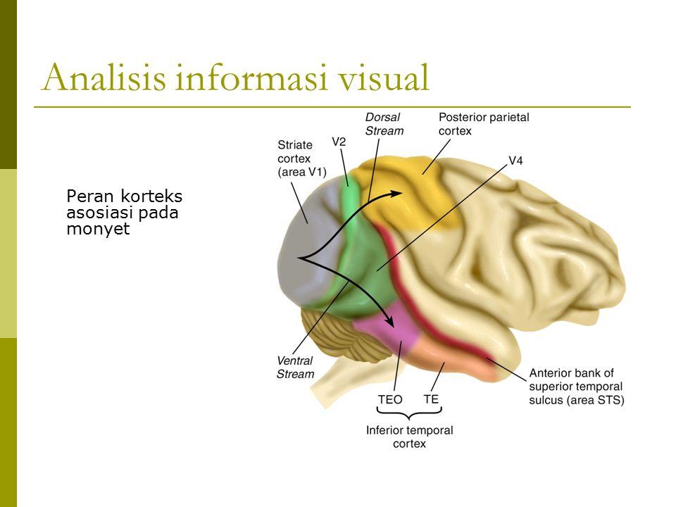 Analisis informasi visual