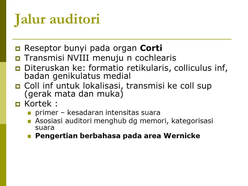 Jalur auditori Reseptor bunyi pada organ Corti