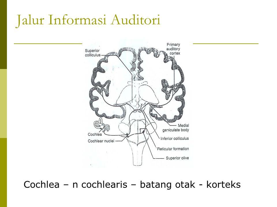Jalur Informasi Auditori