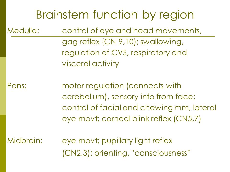 Brainstem function by region