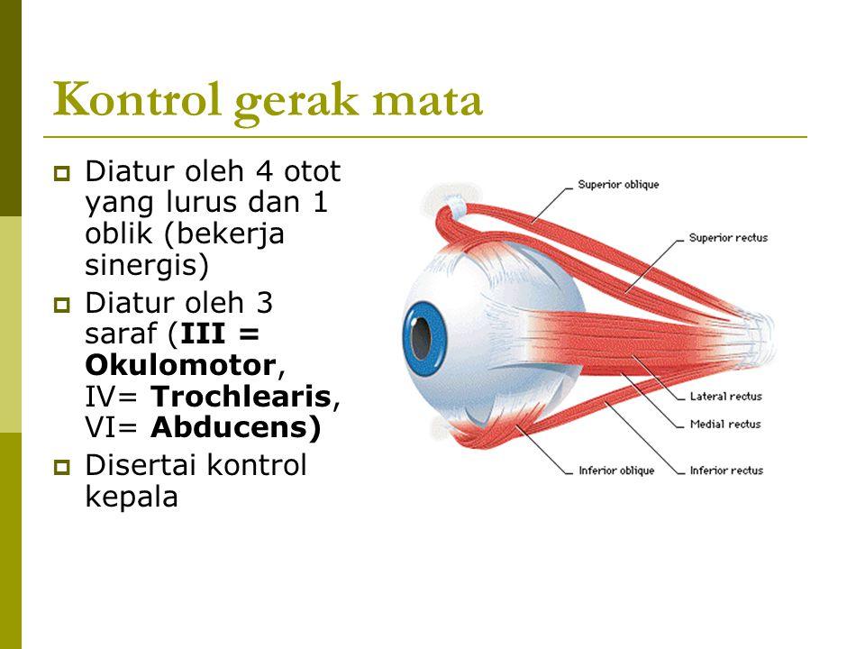 Kontrol gerak mata Diatur oleh 4 otot yang lurus dan 1 oblik (bekerja sinergis)