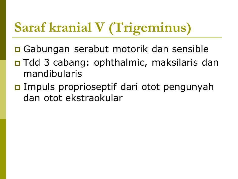 Saraf kranial V (Trigeminus)