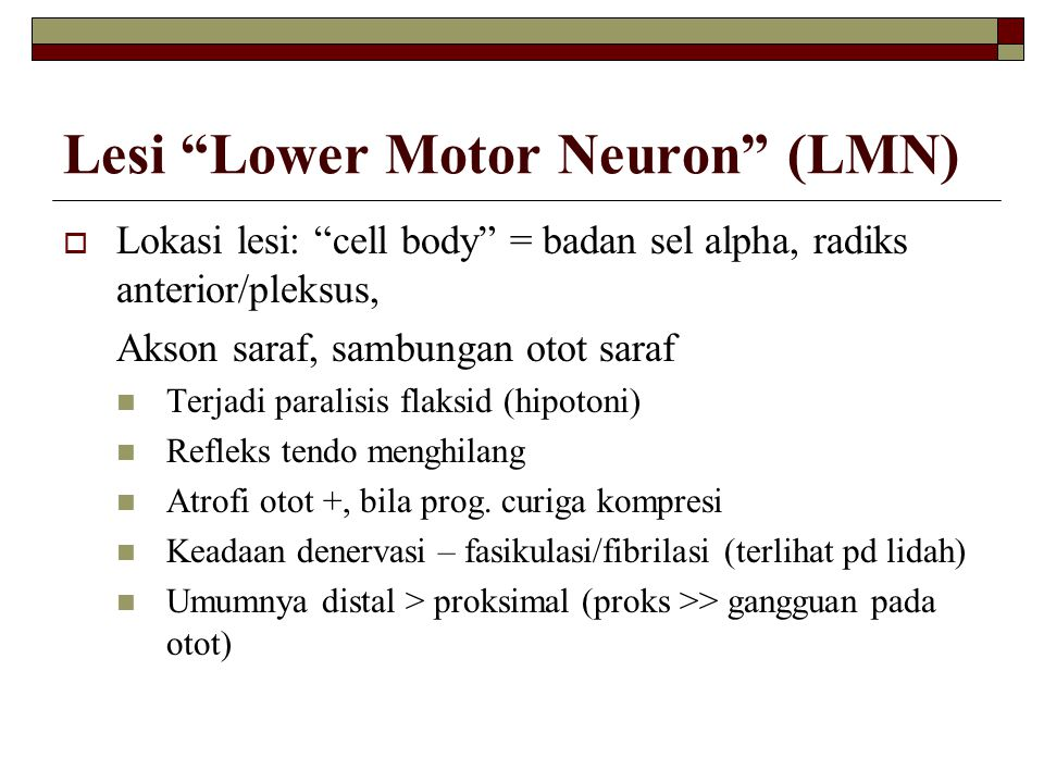 Lesi Lower Motor Neuron (LMN)