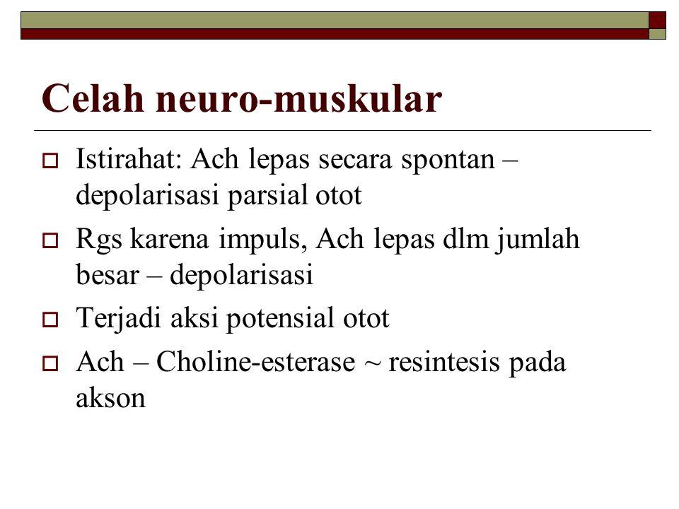 Celah neuro-muskular Istirahat: Ach lepas secara spontan – depolarisasi parsial otot. Rgs karena impuls, Ach lepas dlm jumlah besar – depolarisasi.