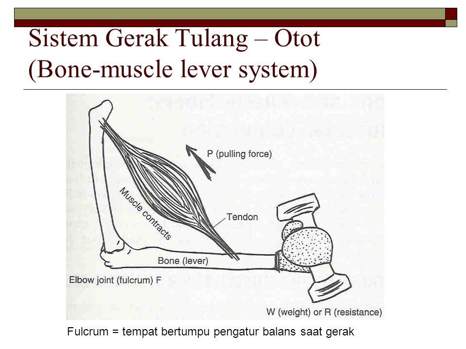 Sistem Gerak Tulang – Otot (Bone-muscle lever system)