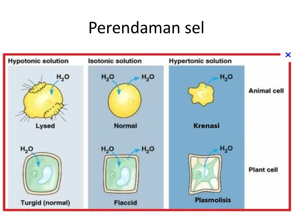 Perendaman sel