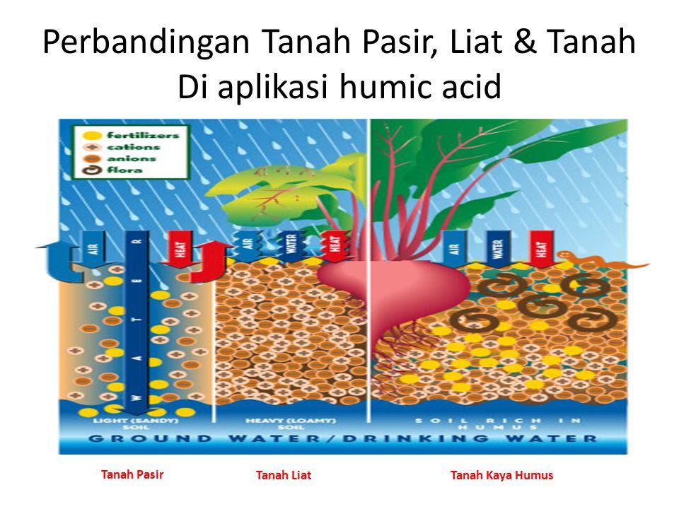 Perbandingan Tanah Pasir, Liat & Tanah Di aplikasi humic acid