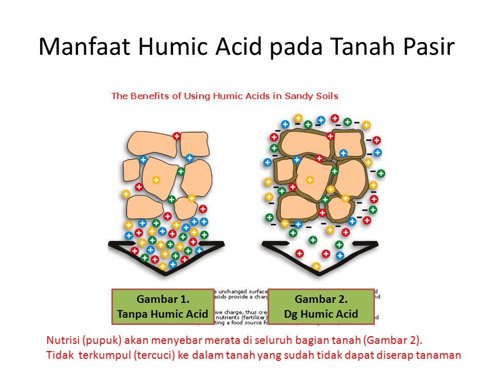 Manfaat Humic Acid pada Tanah Pasir