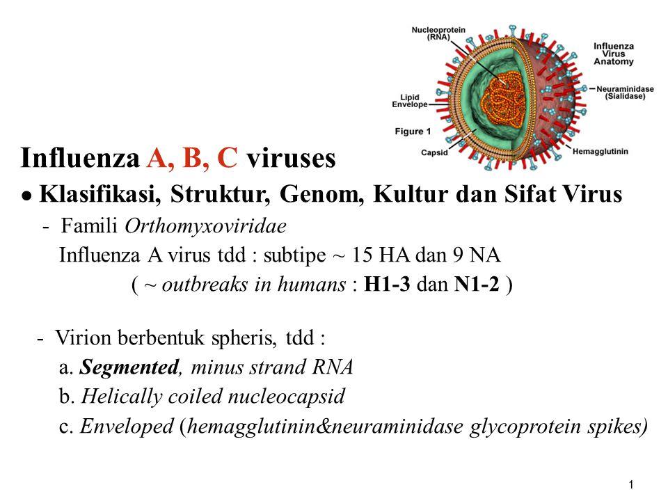 Influenza A, B, C viruses ● Klasifikasi, Struktur, Genom, Kultur dan Sifat Virus. - Famili Orthomyxoviridae.