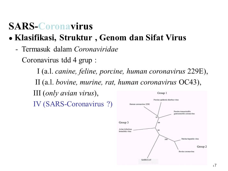 SARS-Coronavirus Coronavirus tdd 4 grup :