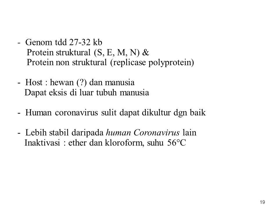 - Genom tdd 27-32 kb Protein struktural (S, E, M, N) & Protein non struktural (replicase polyprotein)