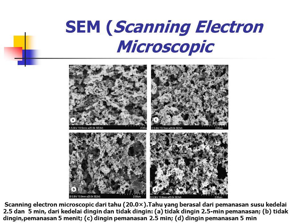 SEM (Scanning Electron Microscopic