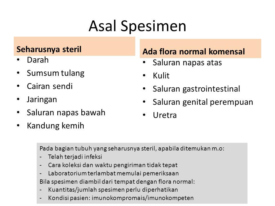 Asal Spesimen Seharusnya steril Ada flora normal komensal Darah