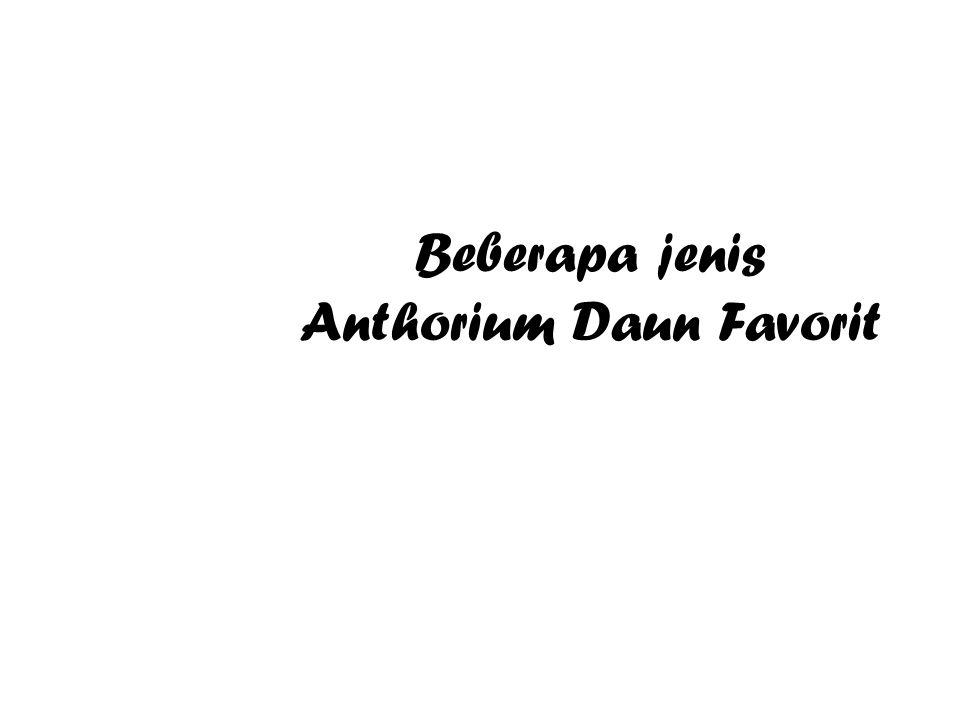 Beberapa jenis Anthorium Daun Favorit