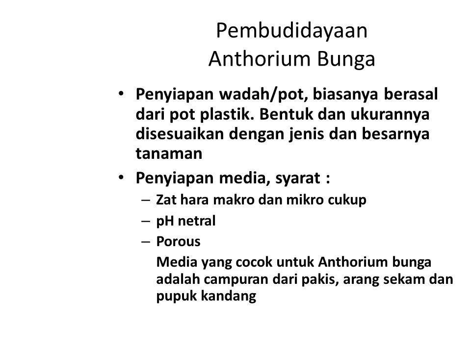 Pembudidayaan Anthorium Bunga