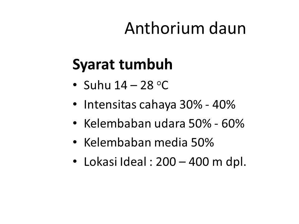 Anthorium daun Syarat tumbuh Suhu 14 – 28 oC