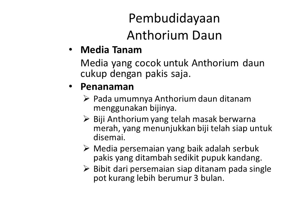 Pembudidayaan Anthorium Daun