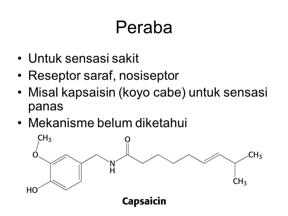 Peraba Untuk sensasi sakit Reseptor saraf, nosiseptor