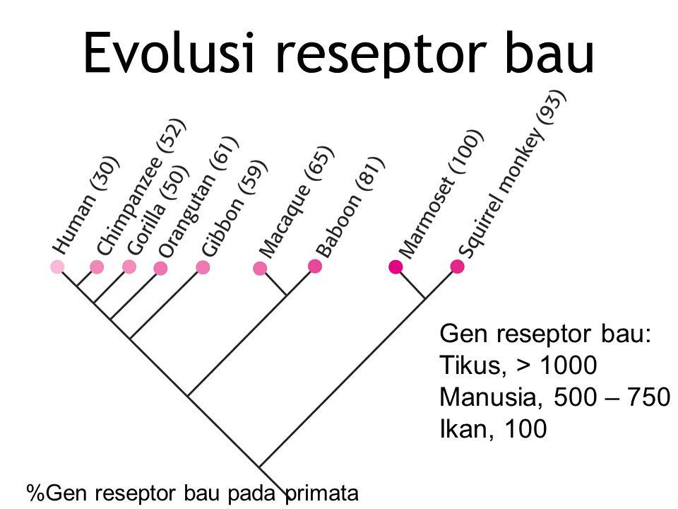 Evolusi reseptor bau Gen reseptor bau: Tikus, > 1000