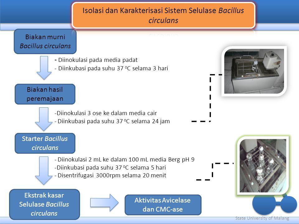 Isolasi dan Karakterisasi Sistem Selulase Bacillus circulans
