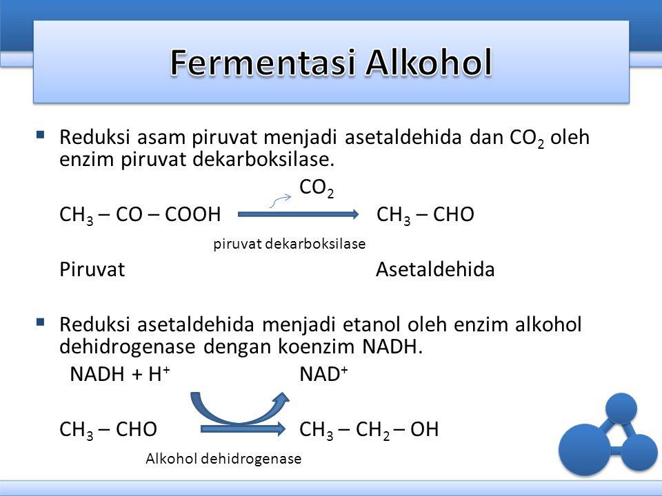 Fermentasi Alkohol Reduksi asam piruvat menjadi asetaldehida dan CO2 oleh enzim piruvat dekarboksilase.