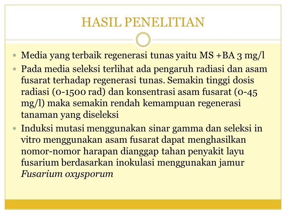 HASIL PENELITIAN Media yang terbaik regenerasi tunas yaitu MS +BA 3 mg/l.