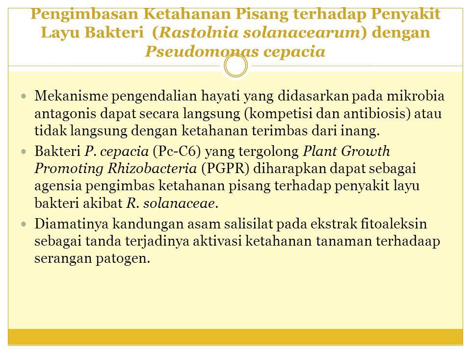 Pengimbasan Ketahanan Pisang terhadap Penyakit Layu Bakteri (Rastolnia solanacearum) dengan Pseudomonas cepacia