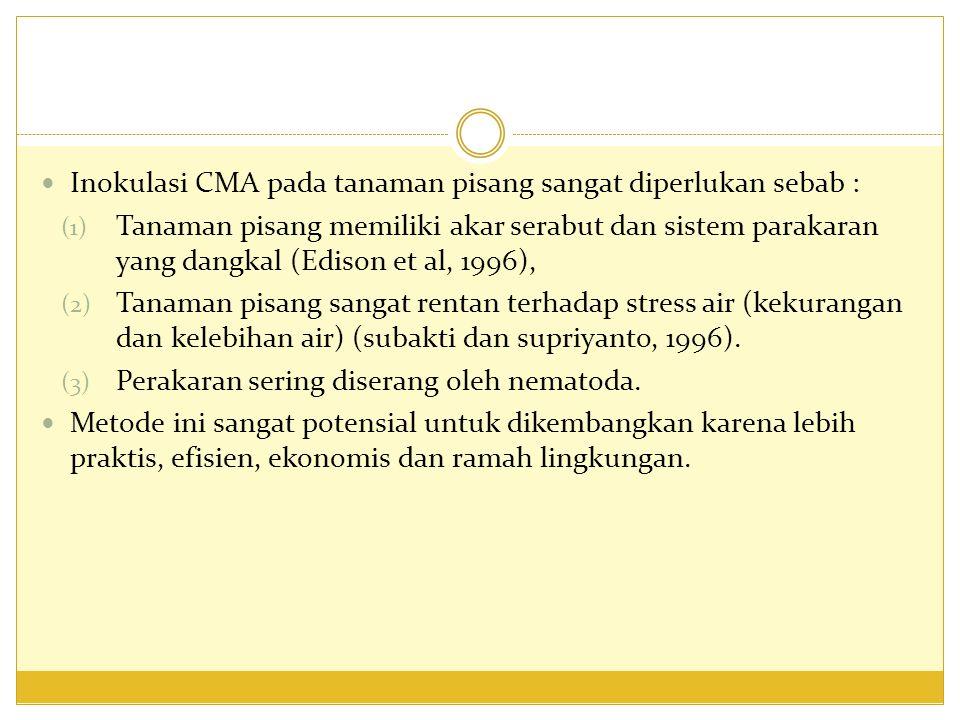 Inokulasi CMA pada tanaman pisang sangat diperlukan sebab :