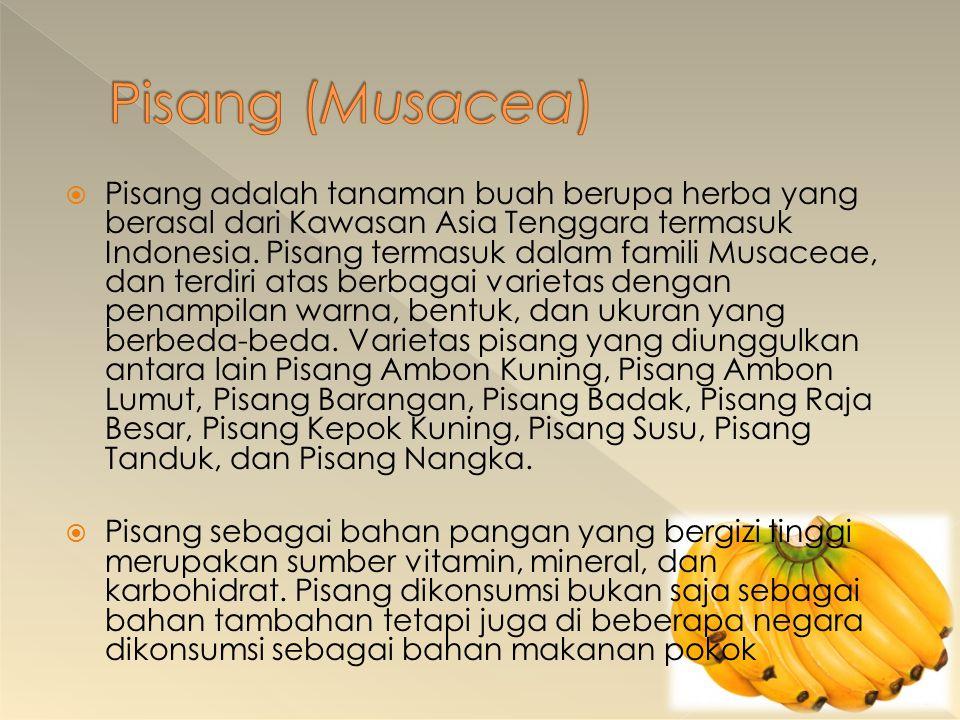 Pisang (Musacea)