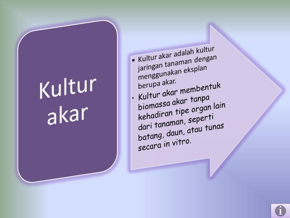 Kultur akar Kultur akar adalah kultur jaringan tanaman dengan menggunakan eksplan berupa akar.