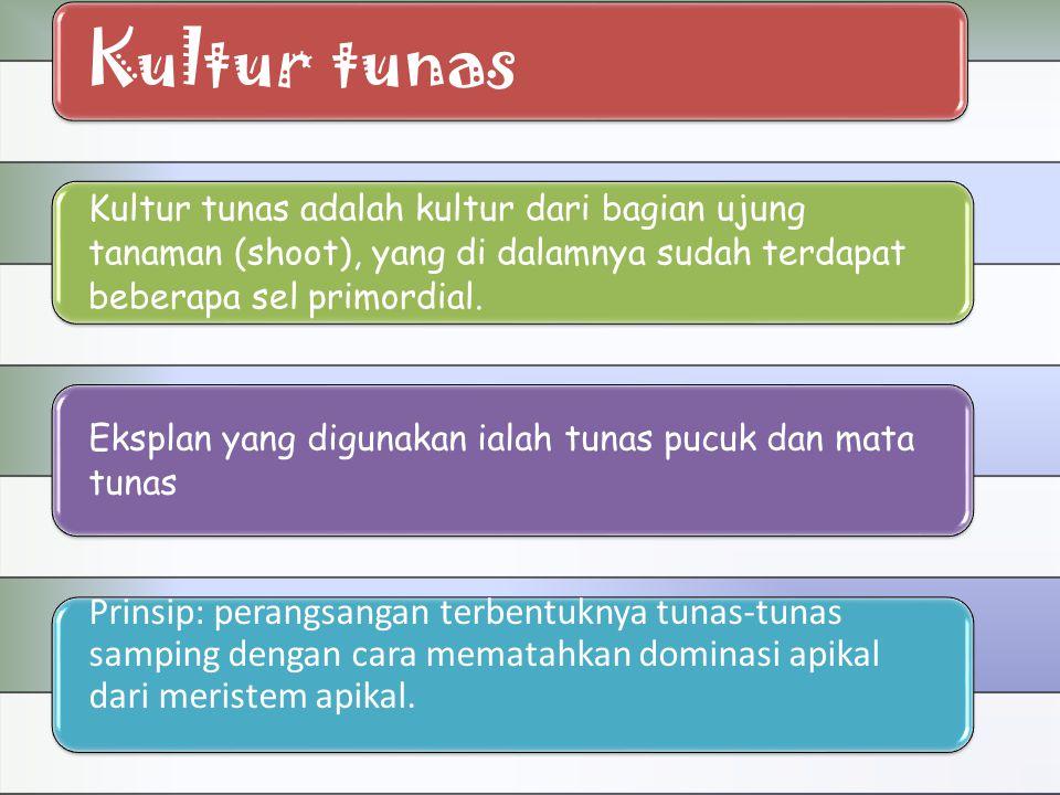 Kultur tunas Kultur tunas adalah kultur dari bagian ujung tanaman (shoot), yang di dalamnya sudah terdapat beberapa sel primordial.