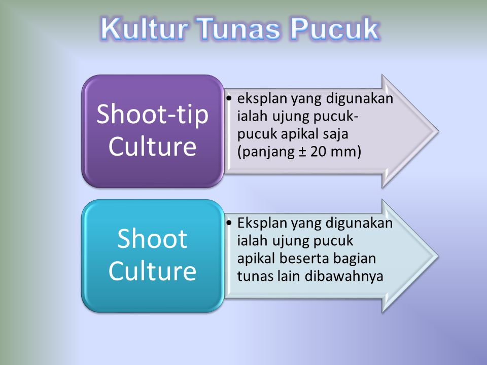 Kultur Tunas Pucuk Shoot-tip Culture